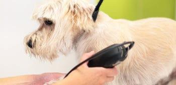 sueldo de peluquero canino en españa