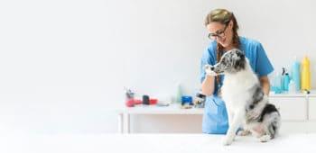 ofertas empleo veterinaria
