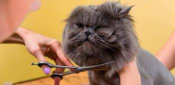 peluqueria para gatos en los cursos caninos