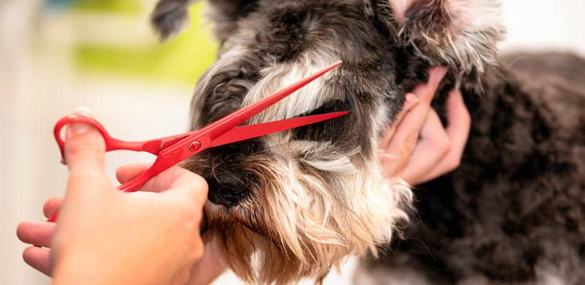 formación peluquería canina