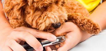 corte de uñas en perros - estética canina