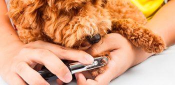 estetica canina - curso peluquería canina
