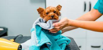 cursos de peluqueria canina en madrid - formación veterinaria