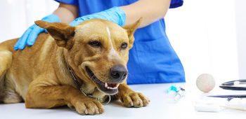 historia de la veterinaria - curso de veterinaria